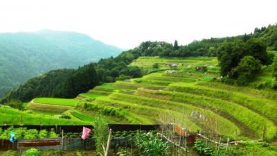 Rice Terraces of Asabu Nishigaoka 2012.7.4 【兵庫県香美町村岡区和佐父西ケ丘】