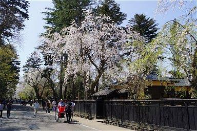 2012GW 北東北桜の旅-1