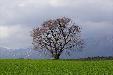2012GW 北東北桜の旅-2
