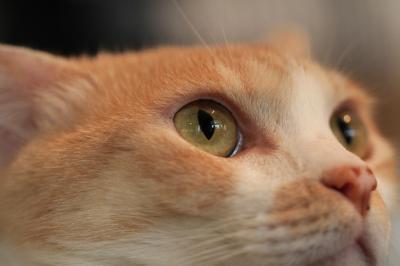 【猫カフェ57】 アンティークと猫のお店 「Catteria Cloud 9Nine(キャッテリア・クラウド・ナイン)」