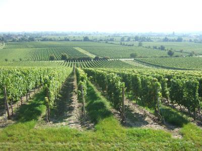 ドイツワイン街道1−ぶどう畑散策 0059