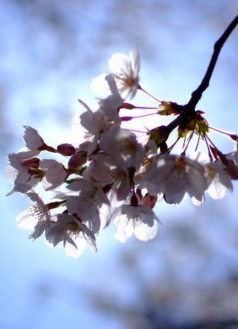 2012越谷の春