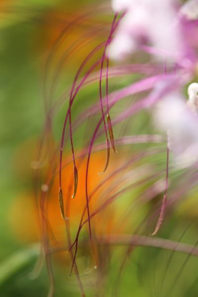 万博公園 夏の花八景 2012