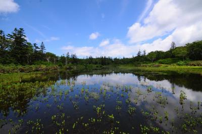 夏のニセコを歩く【2】~どきどきのニセコ沼めぐり~