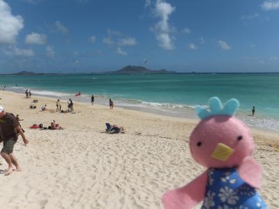 「ALOHA!やっぱりハワイへいこう」ってことで行ってきました♪~カイルア・ラニカイ編~2012年7月