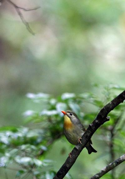 野鳥撮影記録(2012年8月)