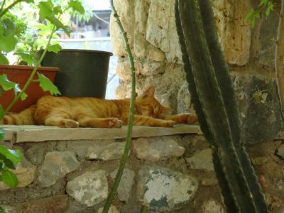 【2012年夏】トルコの旅~その1:旅の拠点セルチュクへ~