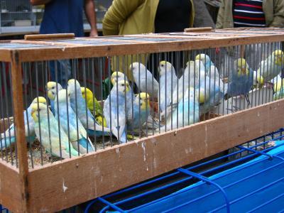 2006秋 フランス・パリ【2】~ヴァンヴ蚤の市とシテ島の小鳥市~