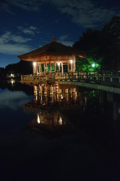 みにくまさんがやってきた・・・高円山の大文字送り火と東大寺万燈供養、撮影会 in Nara
