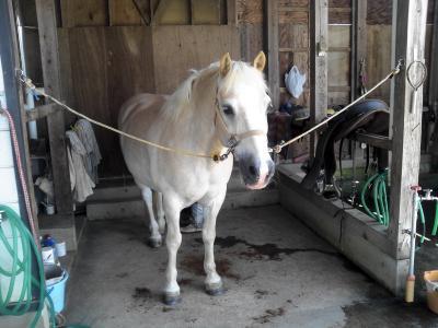 山形県村山の麓で格安お手軽♪乗馬体験(●´ω`●)