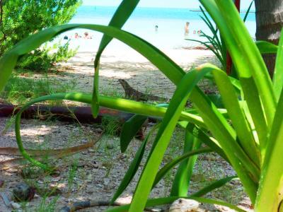カリブの無人島でシエスタ!Isla Contoy(イスラ・コントイ)で保育士体験 父・母・娘のメキシコ紀行7日目