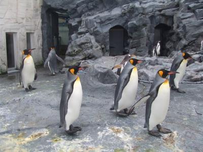2008久々の北海道遠征【その1】札幌経由で旭山動物園へ
