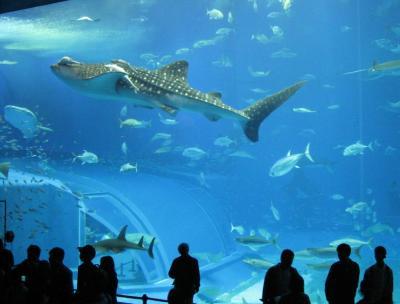 沖縄[2] 美ら海水族館