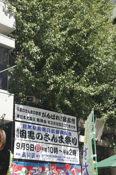 目黒のさんま祭り2012