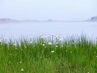 スイスハイキング2012(ワタスゲと霧に埋もれるリッフェル湖)
