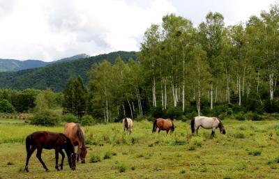 木曽御岳山と木曽馬の里開田高原