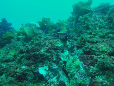 潜水注意の八幡野の海