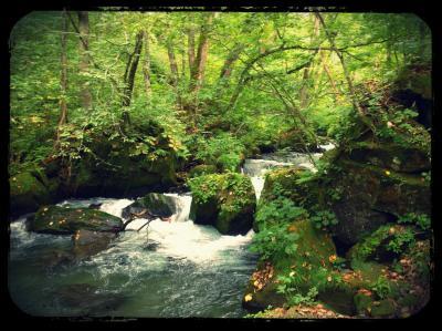 ●緑の癒し~今年も奥入瀬渓流ウォーキング●