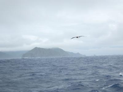 母島でカツオドリとメグロを見る&ちょこっと父島!