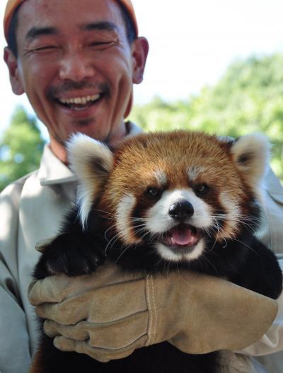 レッサーパンダが笑った!!!レサパンの聖地、茶臼山動物園のほほん記