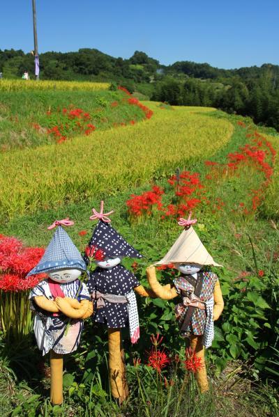 飛鳥路の秋を彩る彼岸花 2012