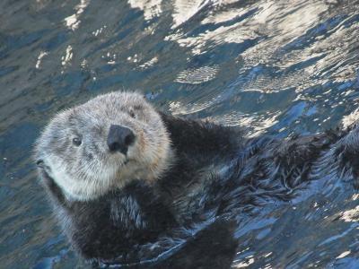 2012.9.17(月)~23(日)バンクーバー/シアトル旅行記②スタンレーパーク・水族館でTanuさんに会う!
