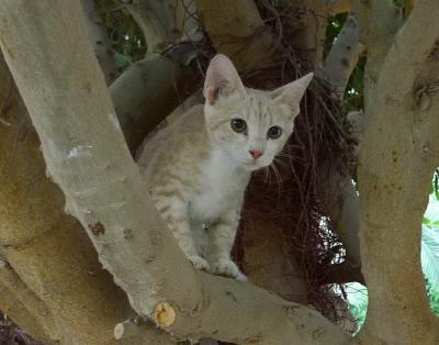 エティハドで行く夏のヨルダン6日間⑤~猫と食べ物~