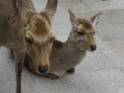 あおによし 奈良へ Part2