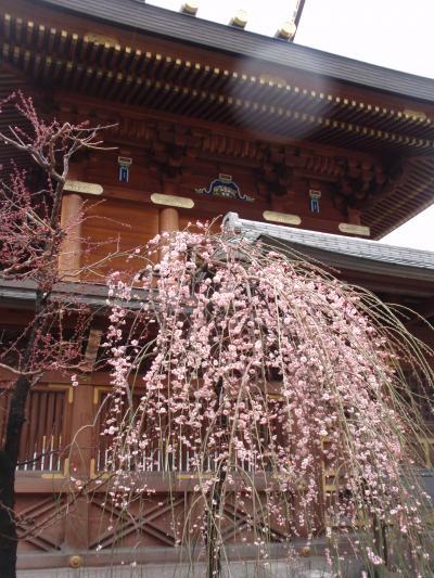 雨の湯島天神② (Yushima in rainy day again)