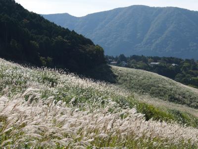 白金色に輝くすすき草原と、ちょこっとお土産スイーツ買いと・・・(後編)