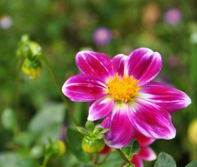 作成中 アートに触れ、秋の花に囲まれよう! ガーデンミュージアム比叡 のほほん記