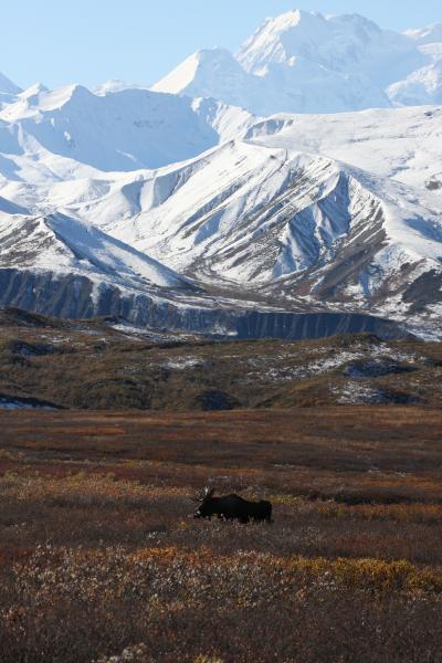グリズリーとオーロラのアラスカ④