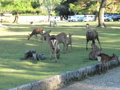 数時間観光in奈良公園の勧め