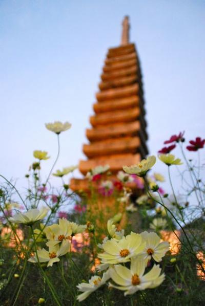 ちょこっと奈良 霊山寺バラ園とか 花あかり とか。