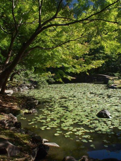 初秋の小石川後楽園へ