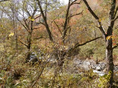冬季閉鎖前の奥志賀スーパー林道の紅葉を観ながら走る!2012年。③