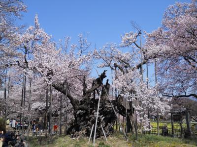 山梨の桜巡りドライブ