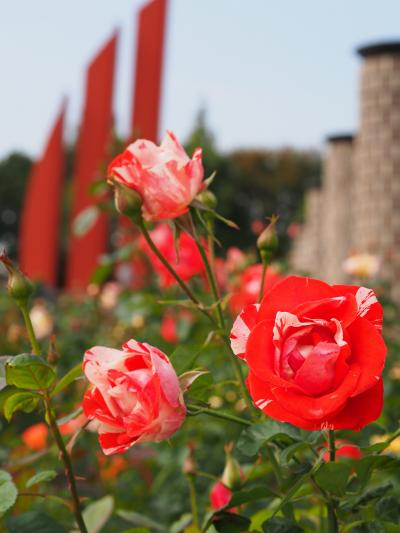 日帰り・秋の荒牧バラ公園