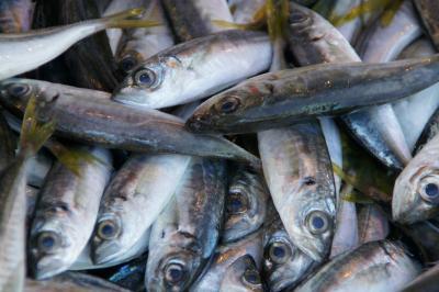 20120930 トラブゾン 魚市場とか、アヤソフィアとか
