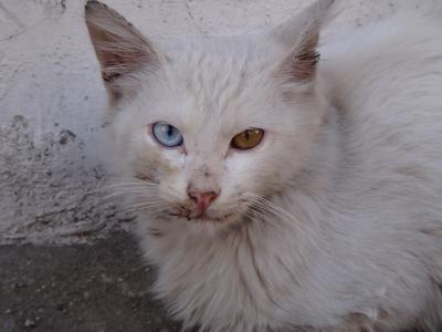 20121007 サフランボル 猫を眺めたり、市内の見所を回ったり