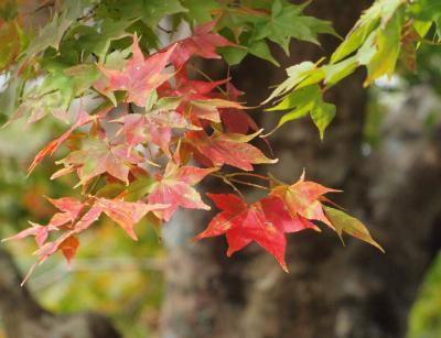 箱根ビジターセンター 周辺の紅葉は、まだ始まったばかりでした 2012年11月3日