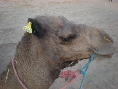 モロッコ*女子一人旅