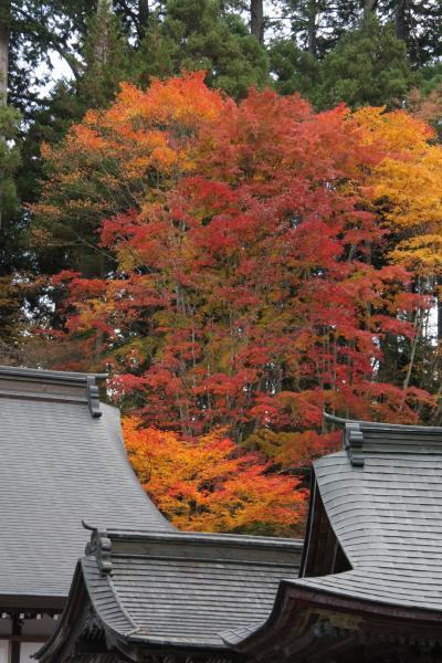 奥秩父の紅葉を訪ねて2012 三峰神社 Autumn color in Mitsumine Shrine/Saitama