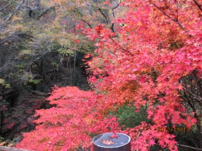 花貫―袋田ー竜神、紅葉狩りの日帰りツアー(2)花貫渓谷「吊り橋」にて。