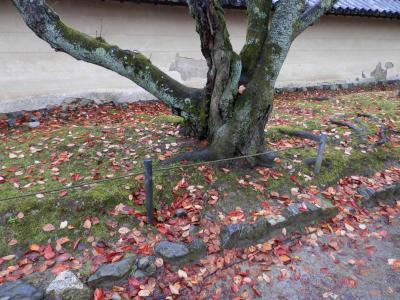 醍醐寺の紅葉美しい、あいにくの雨