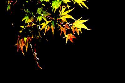 2012 越谷花田苑の紅葉