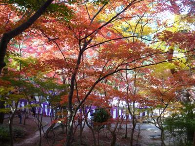有馬温泉二日目。美しすぎる!!瑞宝寺公園の紅葉…グラデーションが何とも言えない美しさでした。