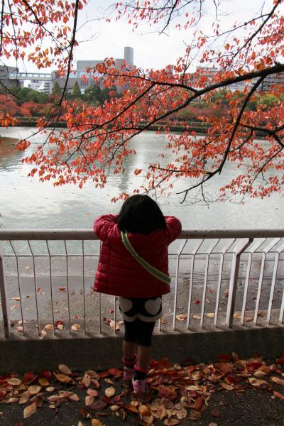 2012 大川の紅葉散歩