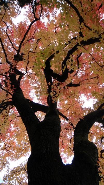 秋晴れの京都ウォーク13 京都の植物園