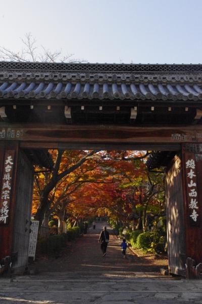 滋賀 びわ湖こどもの国で遊んで西教寺で紅葉狩り